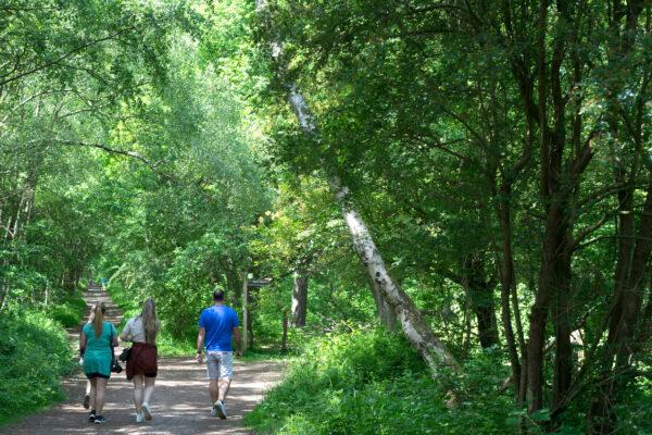 Family walking in Sherwood LARGE photo